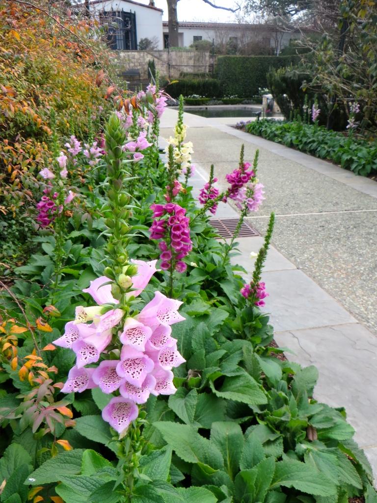 Dallas Arboretum   The Rose Table