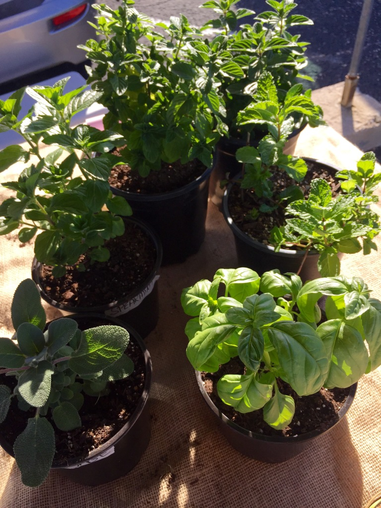 Plants for Sale | The Rose Table