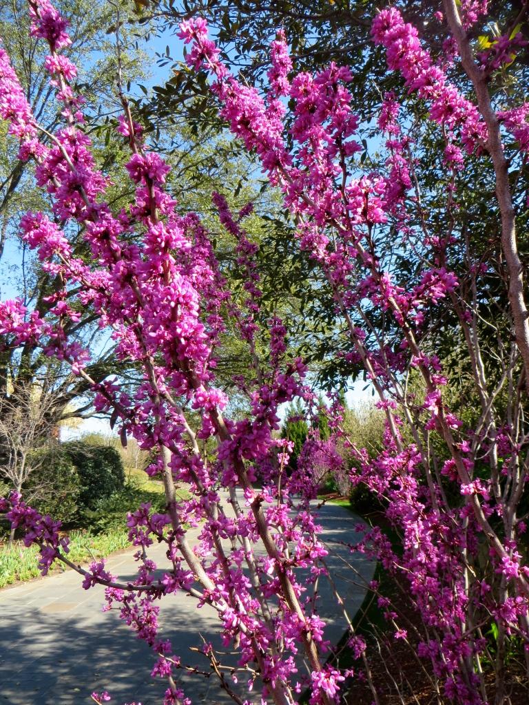 Dallas Blooms 2017, Dallas Arboretum