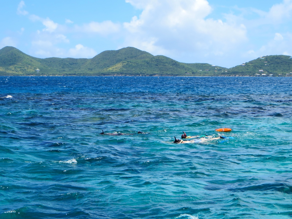 Snorkeling Buck Island with Caribbean Sea Adventures | The Rose Table