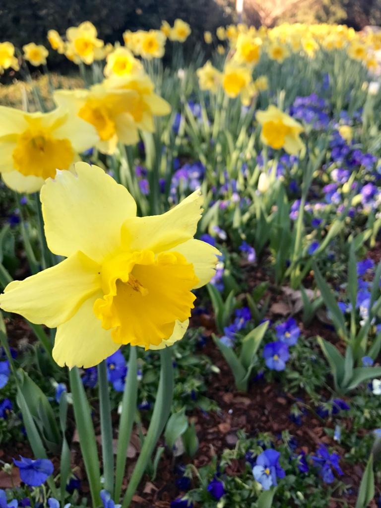 Dallas Arboretum Dallas Blooms   The Rose Table